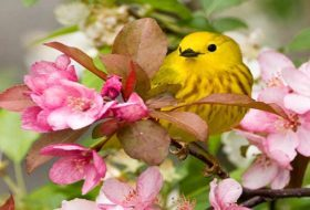 15 Super Colorful Spring Bird Photos