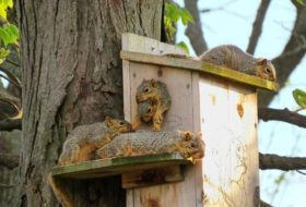 13 Funny Squirrel Photos You Need to See