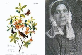 Celebrating Women Naturalists Through History