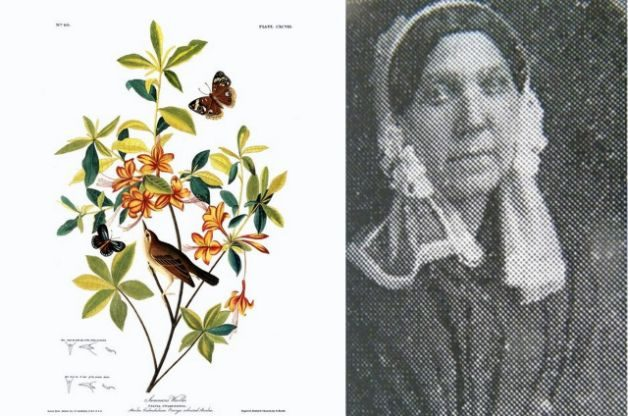 Women Naturalists Bachman