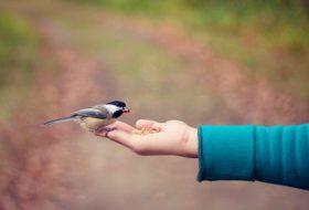 3 Types of Seeds Birds Love Best
