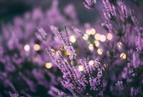 The Backyard Benefits of a Moon Garden