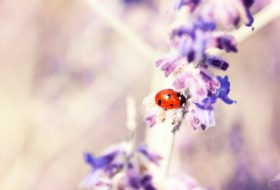 10 Things You Didn't Know About Ladybugs