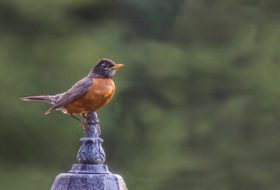 5 Ways to Create a Bird-Safe Backyard