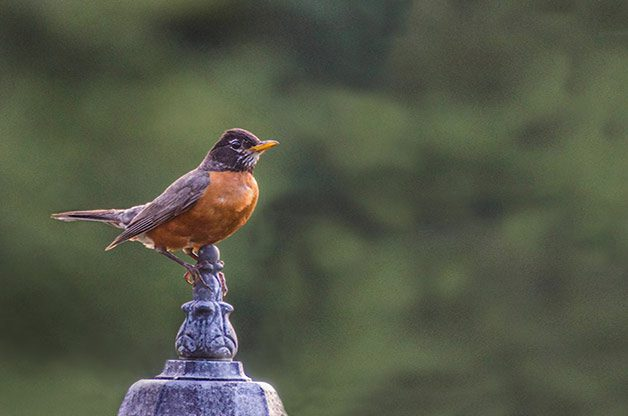 5 Ways to Create a Bird-Safe Backyard - Birds and Blooms