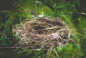 7 Interesting Facts About How Birds Nest