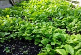 Direct Sow Seeds for Easy Gardening