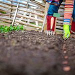 Easy Gardening: Save Time by Direct Sowing Seeds