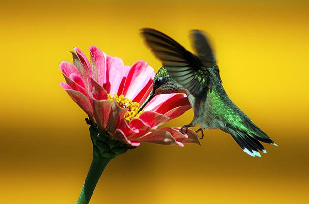 Top 10 Flowers for Hummingbirds | Plants that Attract Hummingbirds