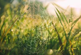 7 Creepy Crawly Facts About Spiders