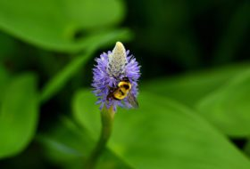 5 Beneficial Bees You Want in Your Garden