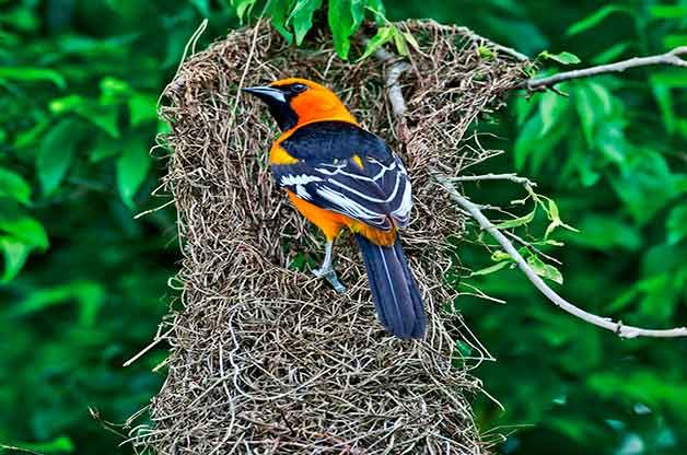8 Different Kinds Of Bird Nests And How To Spot Them Birds