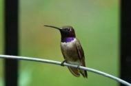Tips to Keep Your Hummingbirds Happy this Summer