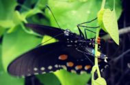 Butterfly Life Cycle Butterfly Eggs 2