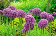 Top 10 Biggest Blooms for Your Flower Garden