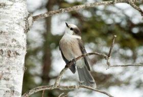 Birding Hotspots: Maine Birding Trail