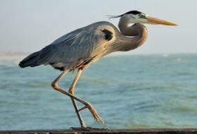 How Bird Feet Work