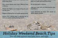 Protect Shorebirds