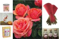 Rose Gifts