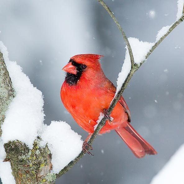 cardinal foods ohio