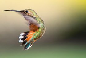 5 Easy Tips to Hand-Feed Hummingbirds