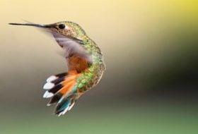 5 Easy Tips to Hand-Feed Hummingbirds