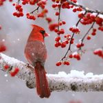 21 Simply Stunning Bird Photos of Cardinals