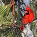 How to Help Birds and Wildlife in Extreme Weather