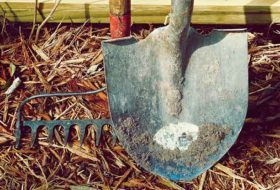 12 Ways to Win the War on Weeds