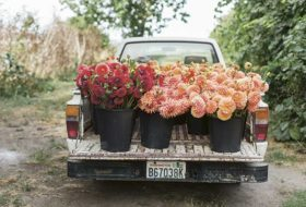 Behind the Scenes of a Flower Farm