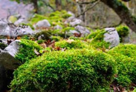 3 Different Ways to Grow Moss