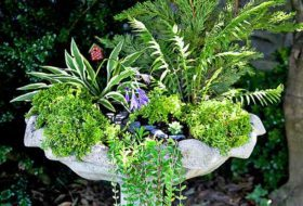 Turn a Birdbath Into a Mini Garden