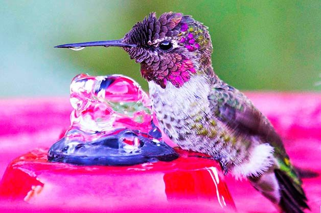 13 Jaw Dropping Facts About Hummingbirds Birds And Blooms