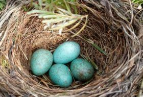8 Different Kinds of Bird Nests and How to Spot Them