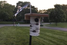 Keeping House Sparrows Out of Bluebird Boxes