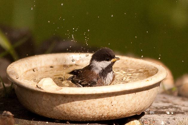 How To Attract Birds To Your Backyard how to attract birds to a small backyard - birds and blooms
