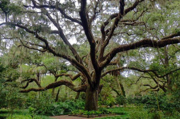 National Flower Bird Tree
