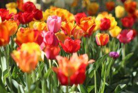 12 Easy Ways to Take Your Garden to the Next Level