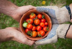 7 Ways to Grow the Ultimate Tomato Crop
