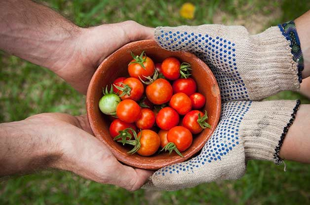 7 Ways To Grow The Ultimate Tomato Crop Birds And Blooms
