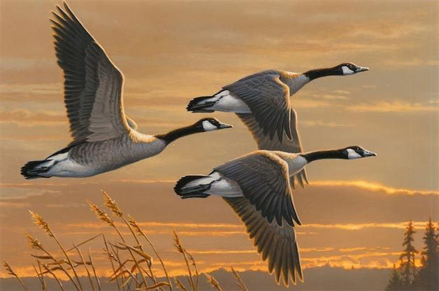 """Purchase the Latest """"Duck Stamp"""""""