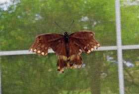 Can I Fix a Broken Butterfly Wing?