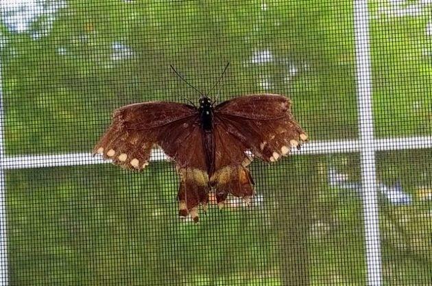 Broken Butterfly Wing