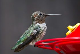 7 Natural Ways to Keep Bees Away From Hummingbird Feeders