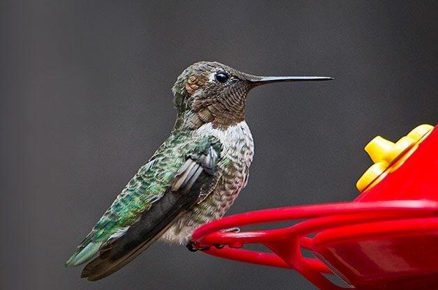 7 Natural Ways To Keep Bees Away From Hummingbird Feeders