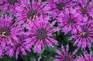 8 Super Fragrant Flowers That Pollinators Love