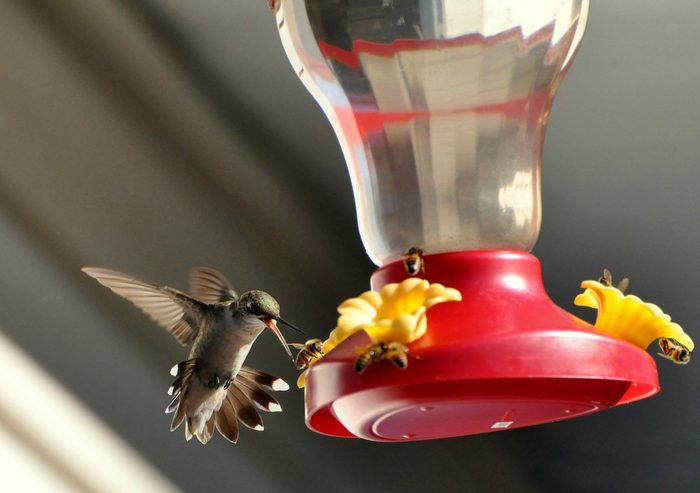 how to keep bees and wasps away from hummingbird feeders