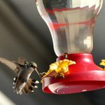 7 Natural Ways to Keep Bees and Wasps Away From Hummingbird Feeders