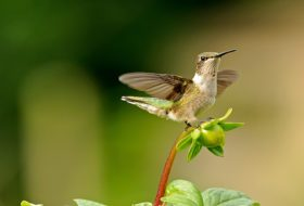 6 Simple Ways to Attract More Hummingbirds
