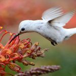 21 Stunning Hummingbird Photos You Need to See